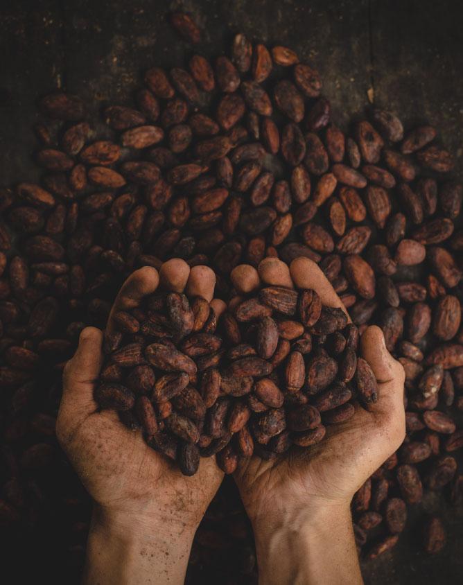 skc-widget-cacao-bg